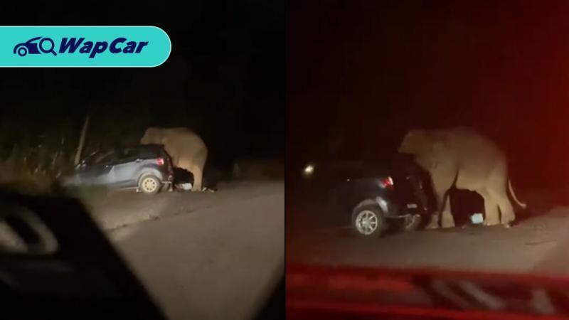 Perodua Axia hancur dipijak gajah mengamuk. Ini puncanya! 01