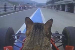 Cute cat in a car: Fur-nando Kotetu's F1 debut!