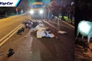 Lagi penunggang motosikal maut langgar lembu melintas! Kali ini di Melaka