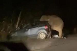 Perodua Axia hancur dipijak gajah mengamuk. Ini puncanya!