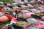 Thailand taxi companies are growing food on abandoned cars to feed out-of-work drivers